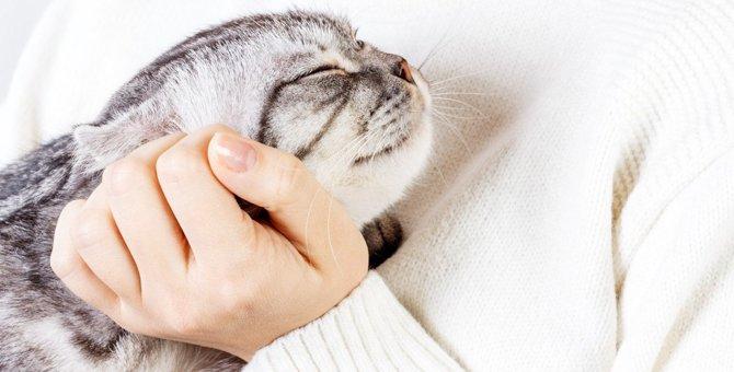 『猫を幸せにする』ためにすべき3つの飼い方
