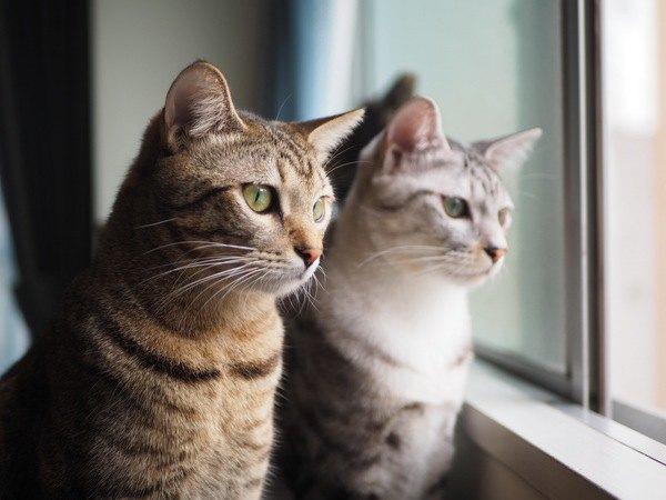猫が飼い主と似てくるってほんと?よくあるパターン3つ