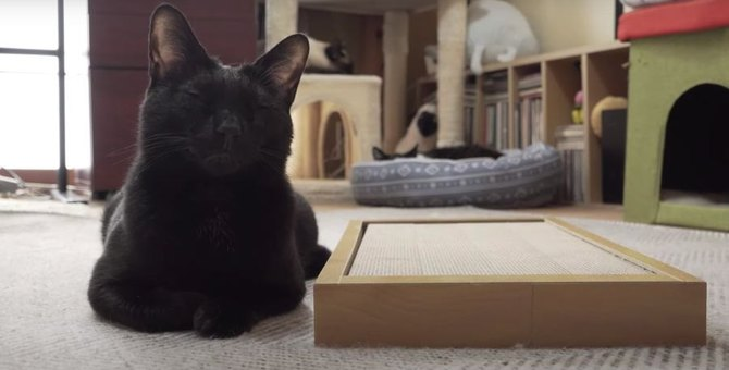 親の心子知らず?新しい爪とぎに興味ゼロの猫ちゃん
