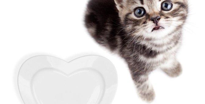 猫餌ランキングトップ5!安全でおいしいご飯はどれ?