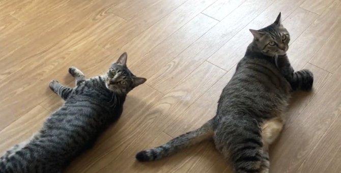 それぞれの過ごし方をする猫ちゃんたち全員をご紹介♡
