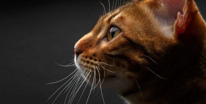 猫は賢い!記憶力が高いのはなぜか?