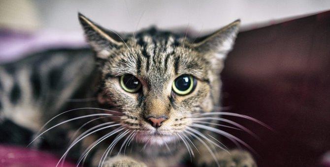 猫を飼う資格なし!飼ってはいけない人の特徴5つ