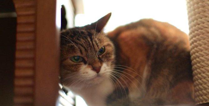 愛猫の性格が変わった気がする…?変化の要因4つ