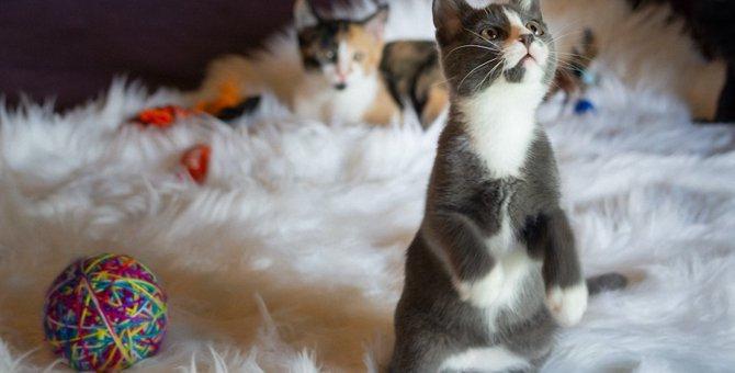 まるで人間「猫が二本足で立つ」理由4つ!やめさせた方が良いの?