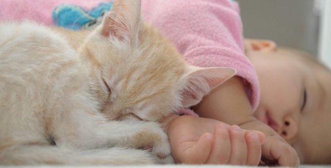 猫がいる生活はこんなに幸せ!6つのエピソード