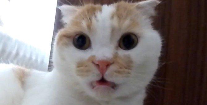 気になるにおい!フレーメン反応の猫さん!