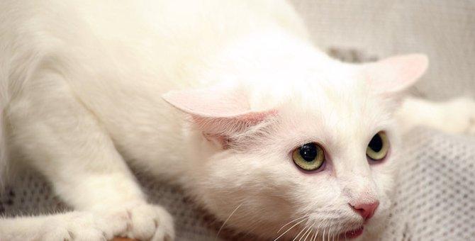 猫に効果的なしつけのコツ、叱り方や役立つグッズなどを紹介