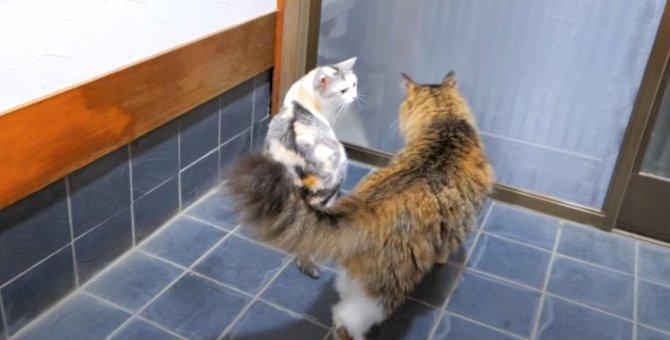 猫ちゃん、良い所を見せるチャンス到来?!
