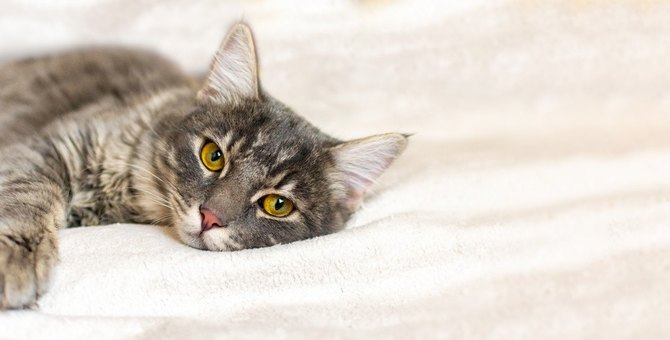 猫が『痔』になる原因4つと予防法