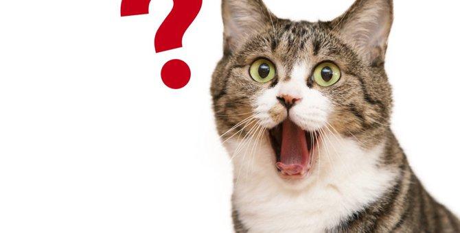 猫が実は理解に苦しんでいる飼い主の『不可解な行動』5つ