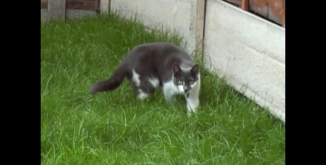 ジワリジワリと距離を詰める猫ちゃんに思わず身構える