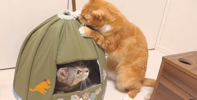 安らぎの猫ハウスが一転!落ち着かない場所に!?