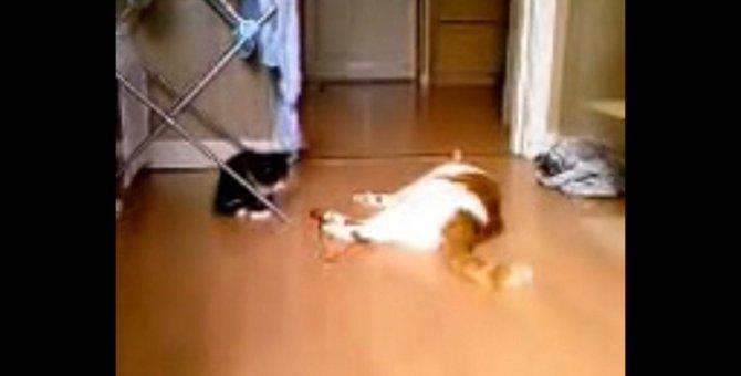赤いひもで遊びたい子猫ちゃん、勢いつけてエイッ!