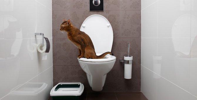 猫がトイレでしない原因とその対策