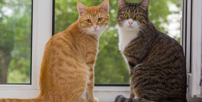 先住猫と子猫を仲良くさせるコツ、仲良くなれるまでの期間など