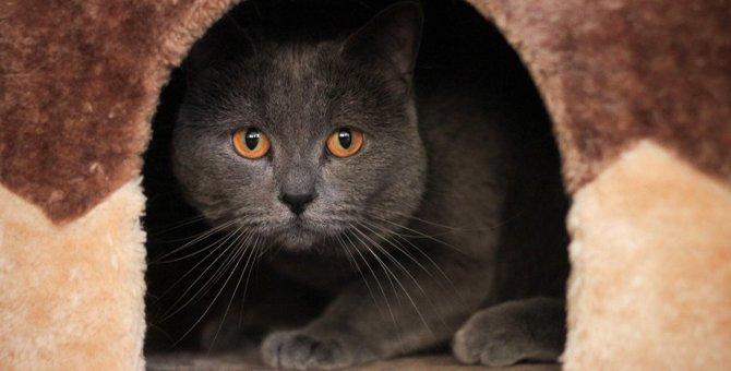 猫が『うつ病』になると示す3つの兆候と対策