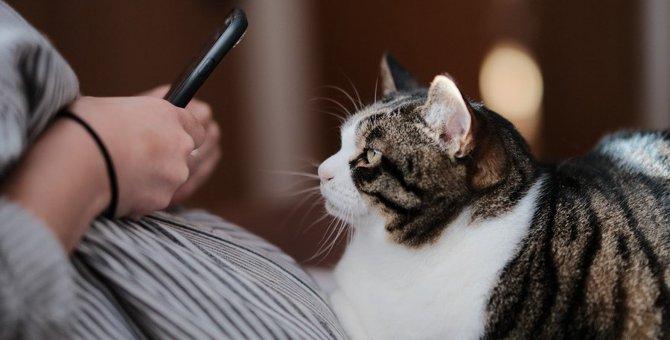 猫が飼い主を『わざと踏んでくるワケ』6選