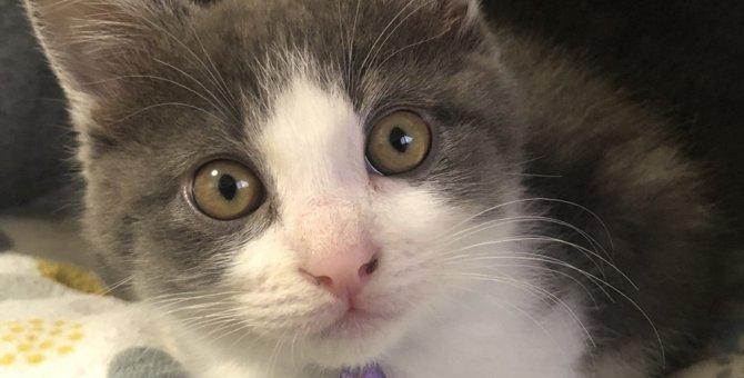 スターになれて大満足★子猫ちゃんの本音|Laylaのペットリーディング