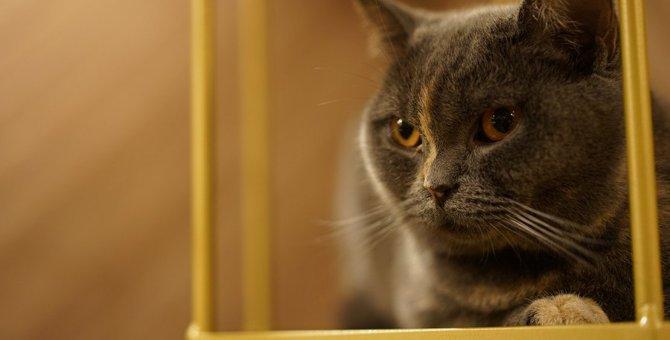 perfume のっちが猫を飼い始めた!気になるお名前や種類は?