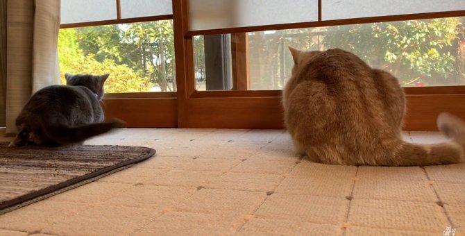 ゆらゆらしっぽは鳥の探知機?!猫のバードウォッチング