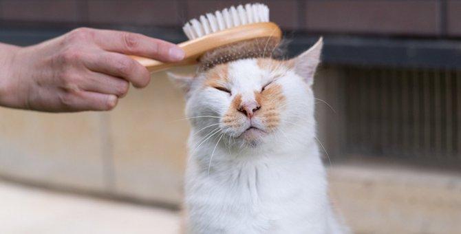 猫の体に『白い粉』が出る5つのワケと予防策