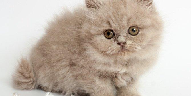 にゃんこれの応募方法と採用された猫ちゃんのご紹介!