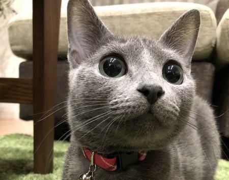 猫がいつも気にしている飼い主の行動5つ