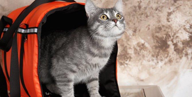 猫のポータブルトイレのおすすめ人気ランキング6選、選び方や使う状況など