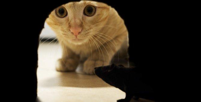 猫がカカカと鳴くのはなぜなのか