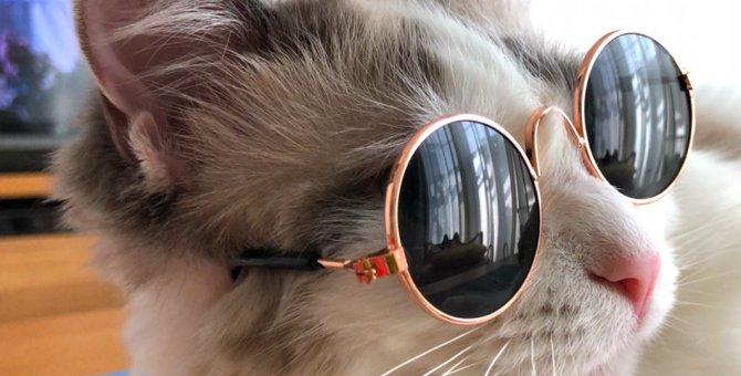 美猫三姉妹による2018春夏サングラスコレクション