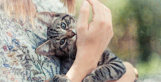 猫が『甘えん坊モード』を発動している時の仕草6つ