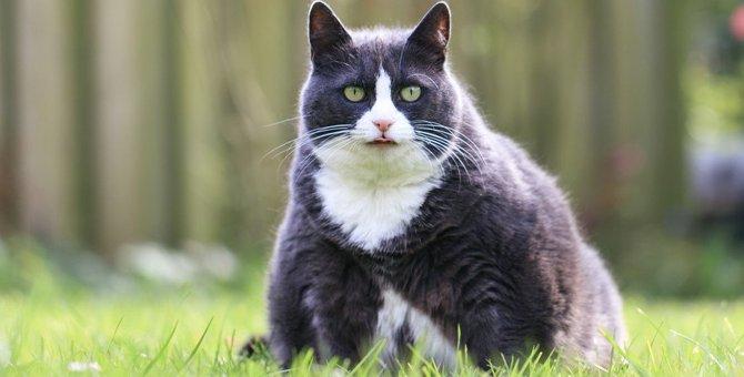 猫の『肥満』が及ぼす影響について