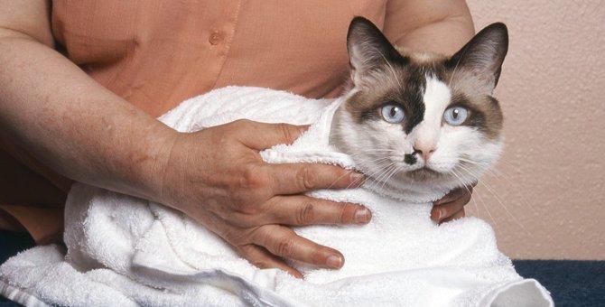 猫のてんかん発作の症状と治療法