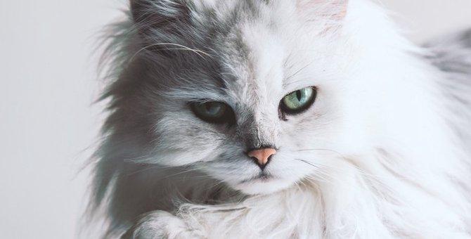 たてがみのある猫たち!カッコイイ写真10連発