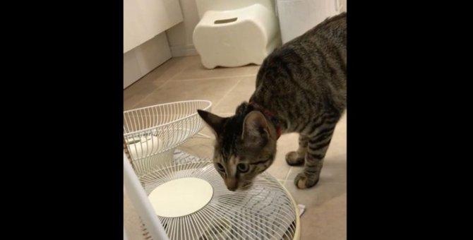 猫ちゃんが突然大ジャンプ!!果たして何にびっくりしたの?