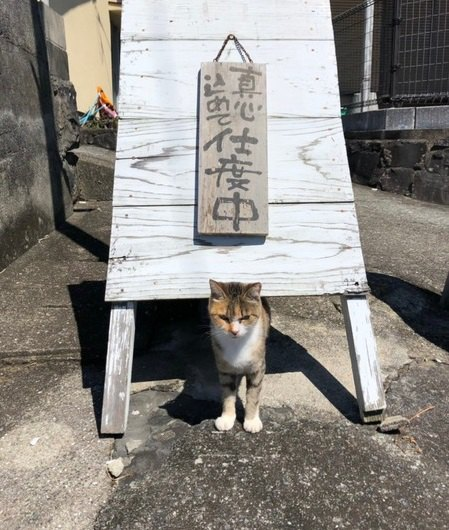 【猫島に行ってみた】熊本県・上天草に浮かぶ『湯島』は猫好きにはたまらない猫パラダイスだった