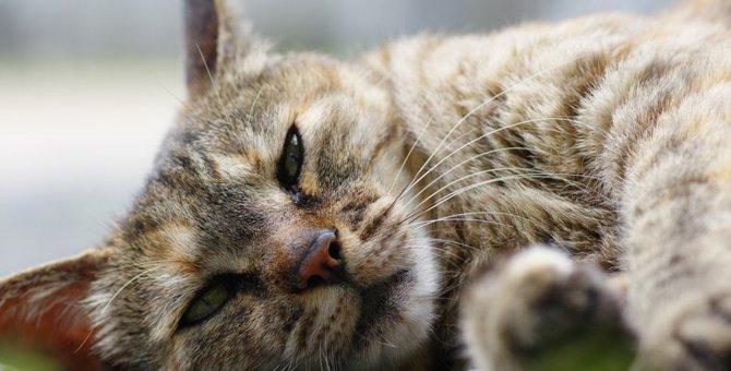 猫が出している『SOSサイン』3選!見落とすと危険に陥ります