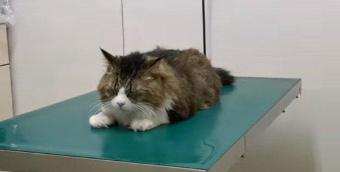 予防接種もばっちこーい!名前の通りカッコいい猫ちゃんに痺れる!