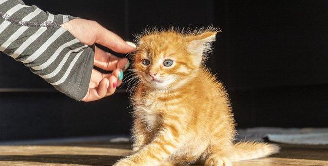 『猫にしてはいけない撫で方』3選!間違ったNG行動がストレスに繋がることも…!
