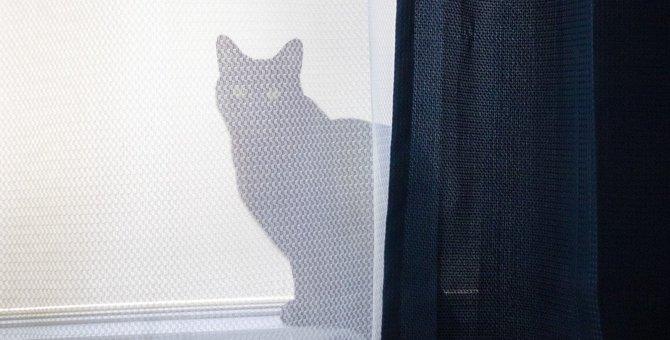 『体調不良の猫が姿を消す』3つのワケ