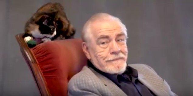 英国人俳優VS自由過ぎる猫!史上初のインタビューの行方は?