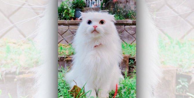 LAYLAの12猫占い【8/10~8/16】のあなたと猫ちゃんの運勢