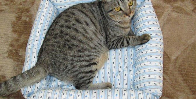 今の時期に大活躍♪愛猫のためにベッドを作ってみた!