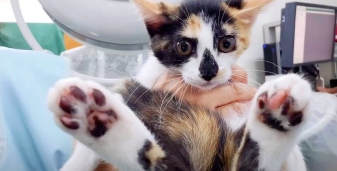胃に鋭利な異物が入った子猫…手術困難な状況に奇跡が起こる!