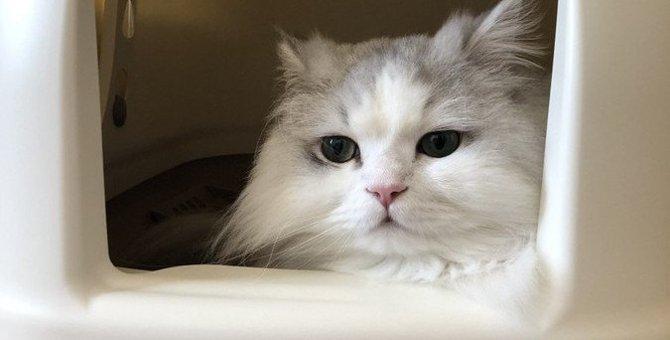 猫に最適な『トイレの場所』とは?気をつけたい4つのこと