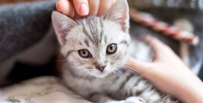 猫に嫌われてしまうNG行動5選!コレをする飼い主は愛猫から好かれない!