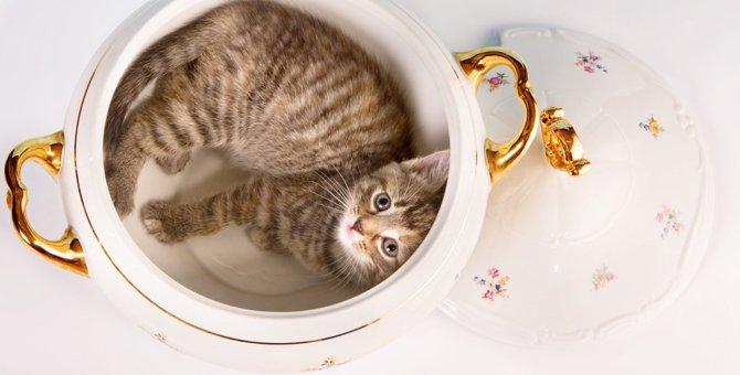 猫鍋とは?土鍋で眠る猫達がかわいいと話題に