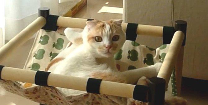 「撮ってる?」カメラの方が気になる猫さん!