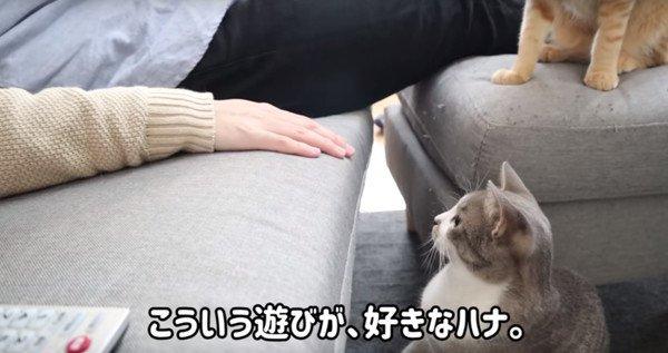 もうすぐ1歳を迎える猫ちゃんのお気に入りの遊び